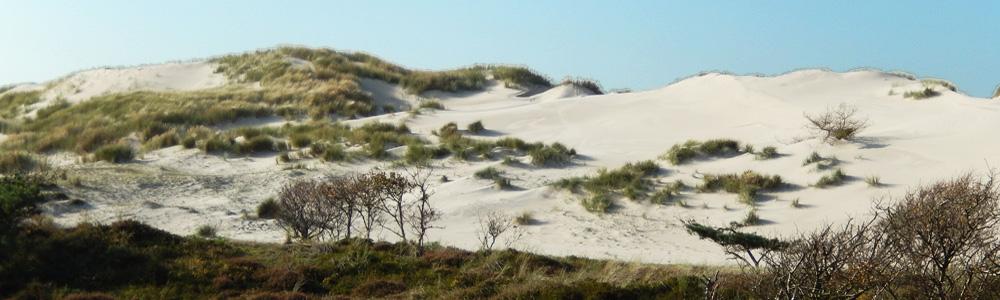 duinen4