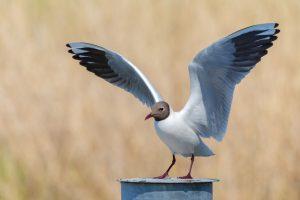 vogelspotters Bergen aan Zee